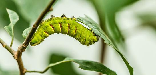 Sommarsäkra din sophämtning och slipp larver