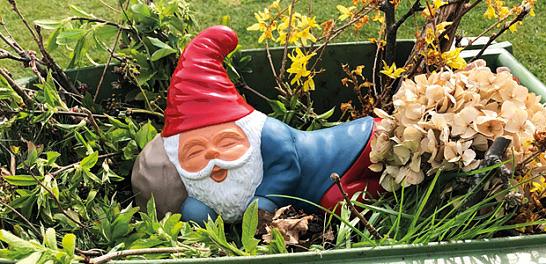 Trädgårdstomtar i trädgårdsavfallet förstör komposten