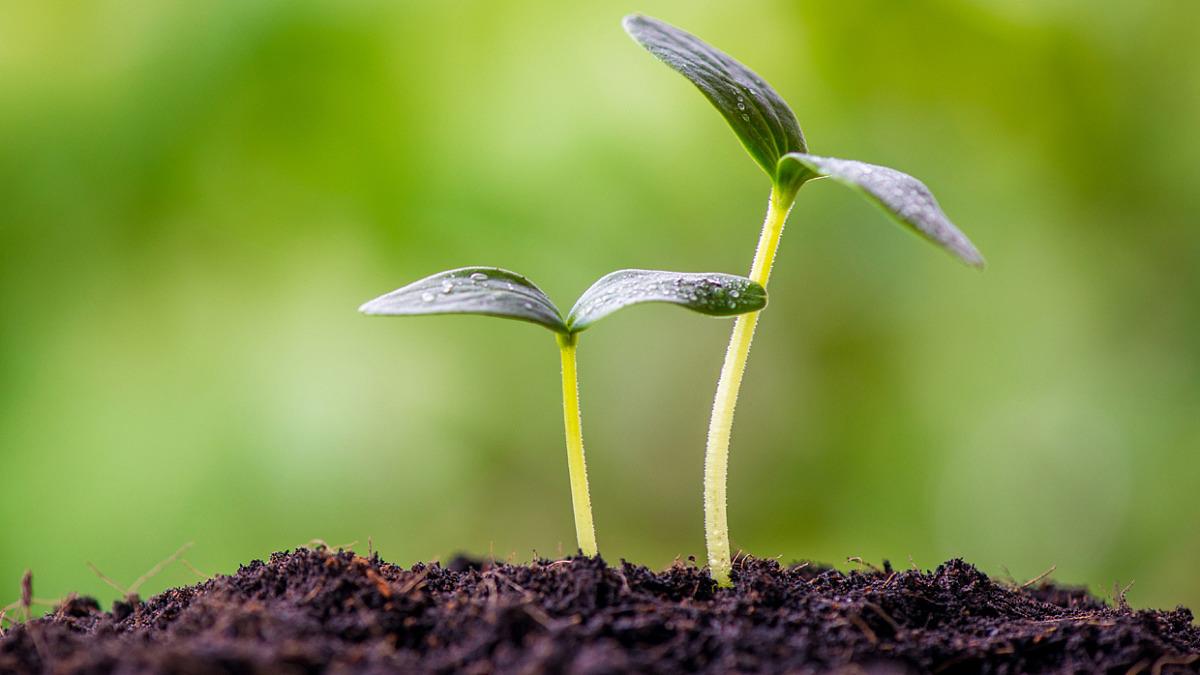 Biokol gör jorden mindre giftig