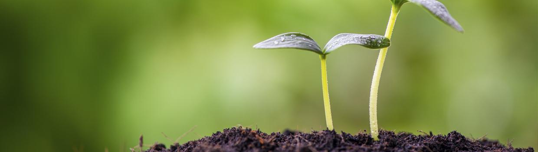 Späda växter i jord